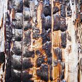 Charred surface of wood after fire