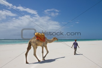 Camel walking on Kenyan beach