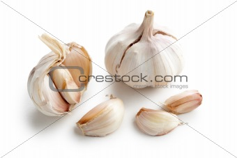fresh garlic on white background