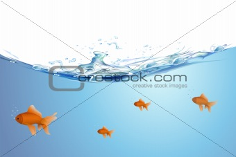 beautiful golden fishes