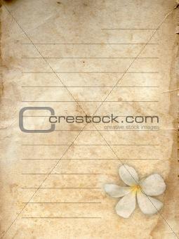 old grunge paper white flower print
