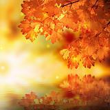 Abstract autumn maple