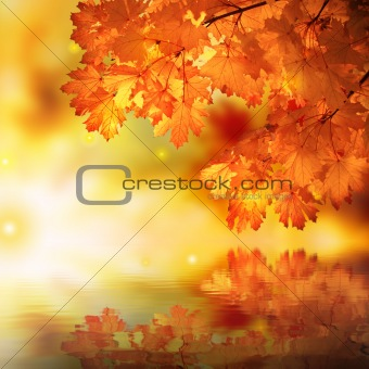 Abstract autumn maple