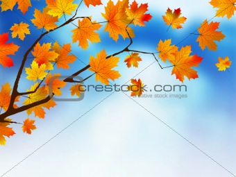 Autumn colored leaf on blue sky.