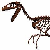 The skeleton of Dromaeosaurus.