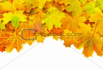 autumn leafs isolated on a white