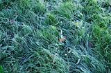 Frozen meadow grass