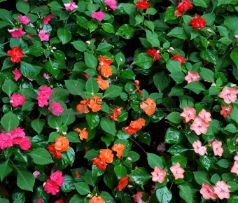 Group of colorful and beautiful flowers