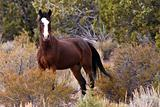 Wild Open Range Horse