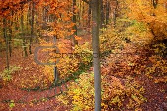 Autumnal trees at park Wilhelmshöhe in Kassel