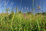 Wild grassland, seen at Mt. Drnberg in Germany