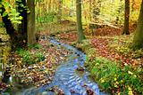 Idyllic creek in a fabulous autumnal wood