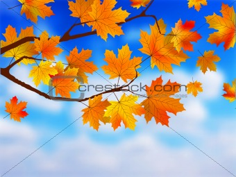 Beautiful Autumn Background against clue sky.