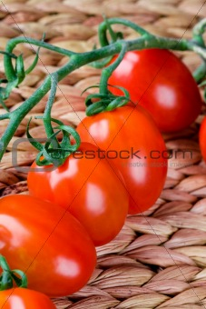 fresh tomatoes bunch