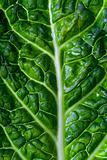 savoy cabbage leaf