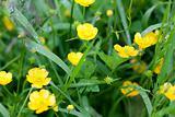 Yellow flowerses