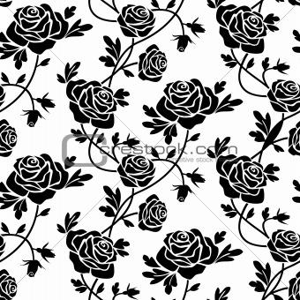 Black roses at white