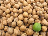 Brown whole organic walnuts as background