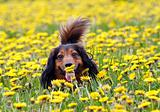 take a smell the dandelions