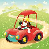 Funny dog on a car