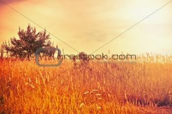 Bright summer landscape