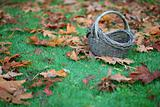 Empty Basket On Grass In Leaves