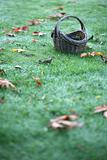 Empty Basket On Grass With Leaves