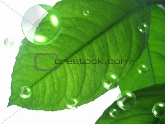 green leaf with abstract air bubbles