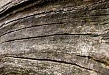 Bleeched Wood