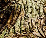 Gnarled Wood