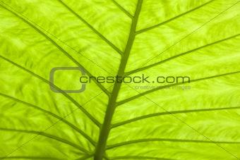 Green leaf surface