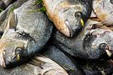 Sea bream in a pile