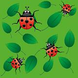 Ladybirds on leaf