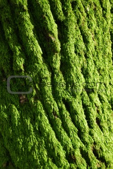 The green moss