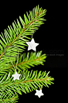 Fir branch with the stars.