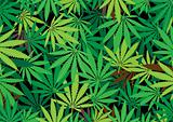 hemp background