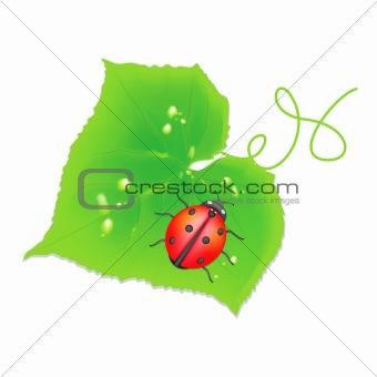 Cucumber sheet with the ladybird