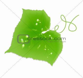 Cucumber sheet