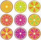 set of colorful citrus slices