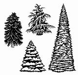 Set Christmas Tree Silhouette. Vector