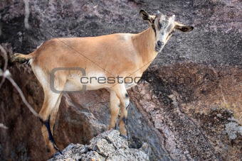 Abela Rock, Uganda, Africa