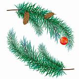 pine branch with cones and toy