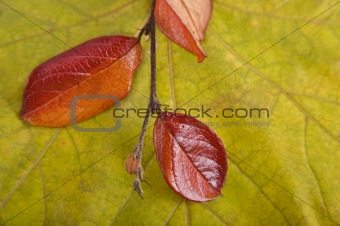 Autumn card of colored leafs with colorful branch
