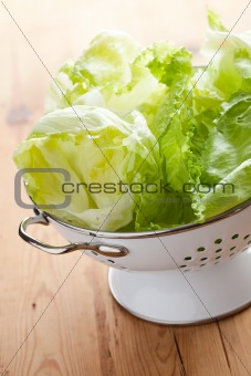 green lettuce in colander