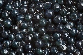 black caviar background