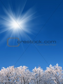 background with winter woods under sky