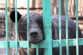 bear closed in zoo cage