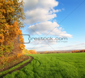autumn landscape with green field