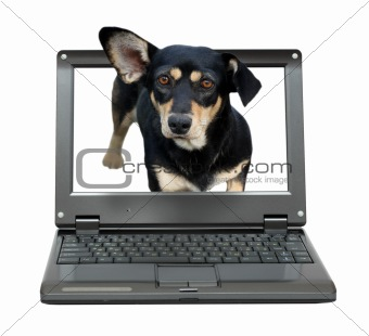 small laptop with dog