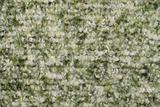motley wool fabric texture